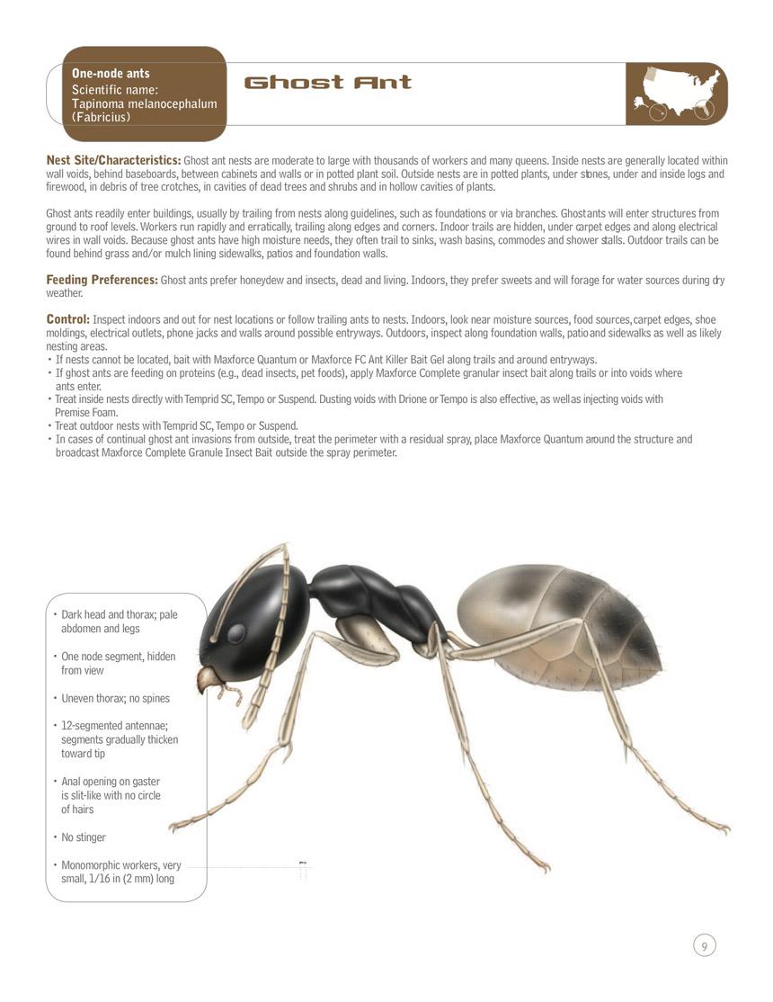 Ants Scout Pest Elimination Scout Pest Elimination